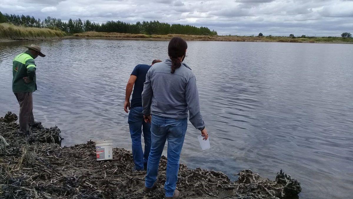 Analizan los motivo de la mortandad de peces en el El VIvorón.