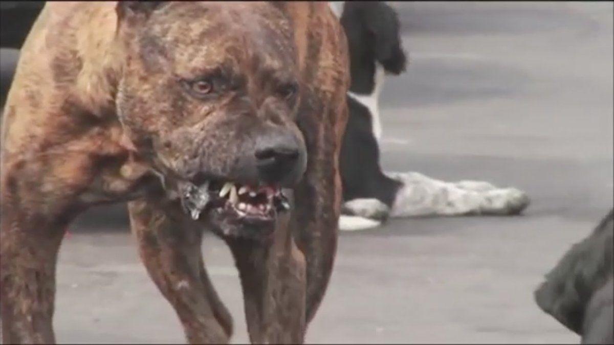 Perro salvaje. Un perro cimarrón mató a un trabajador rural.