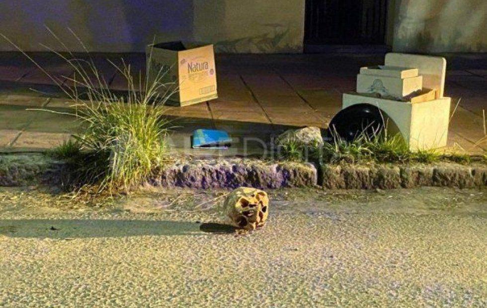 Macabro. Encontraron un cráneo en plena calle.