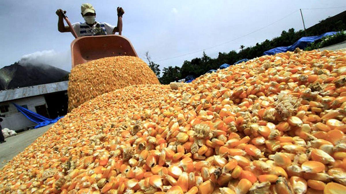 El maíz y la soja suben en el mercado de Chicago.