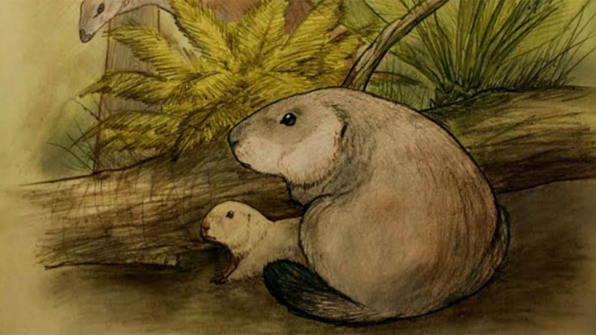 Descubren un mamífero argentino de 70 millones de años