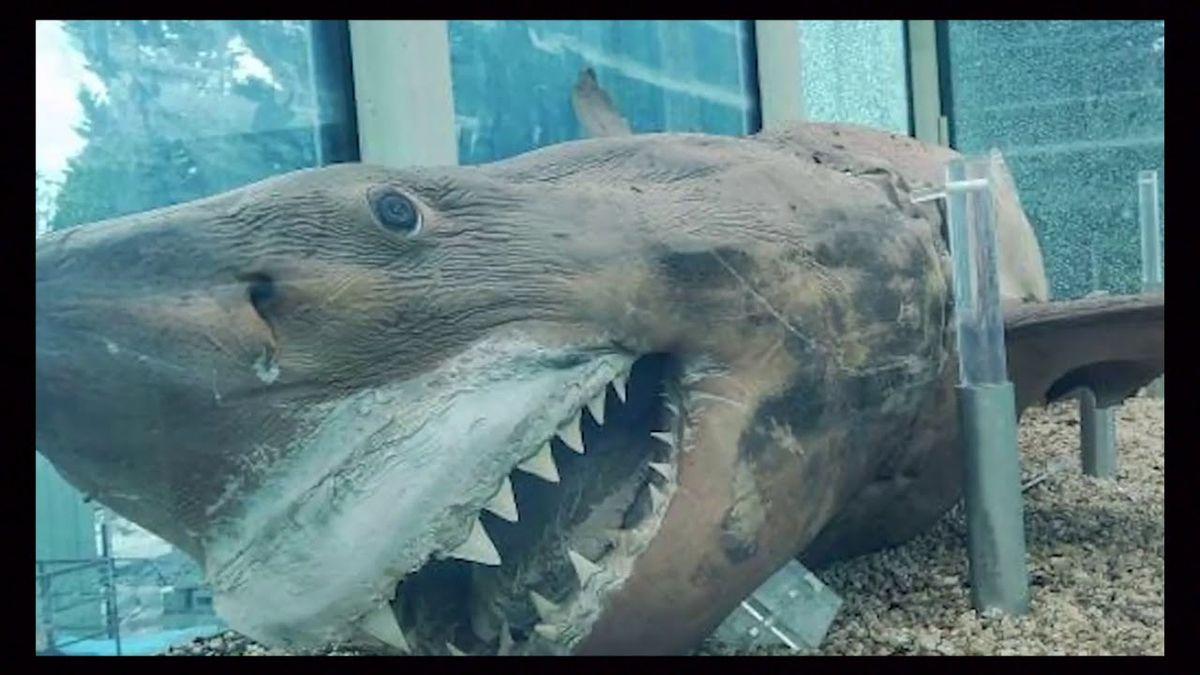 Lo vandalizaron. Un tiburón de 5 metros fue abandonado en un parque acuático.