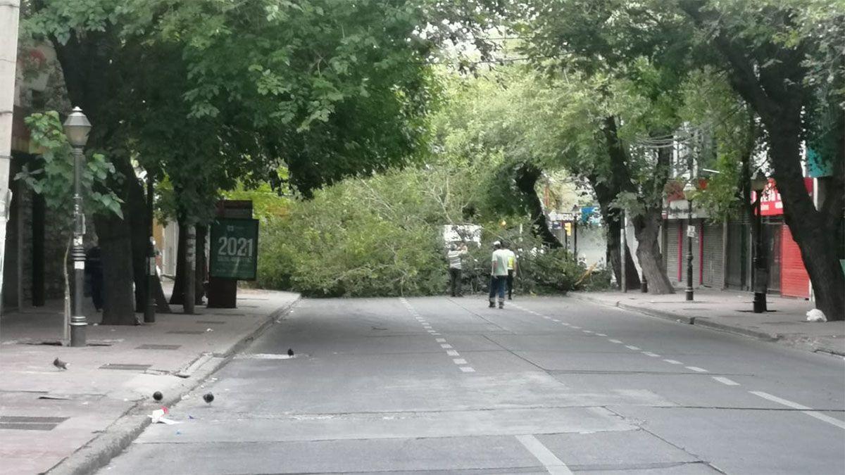 Cayeron tres grandes ramas y cortaron por completo una calle céntrica