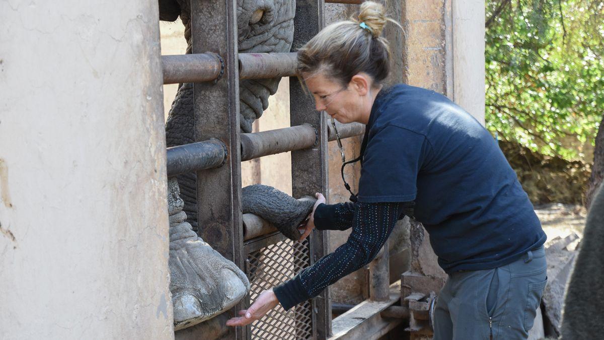Las elefantas Pocha y Guillermina se preparan para viajar a Brasil
