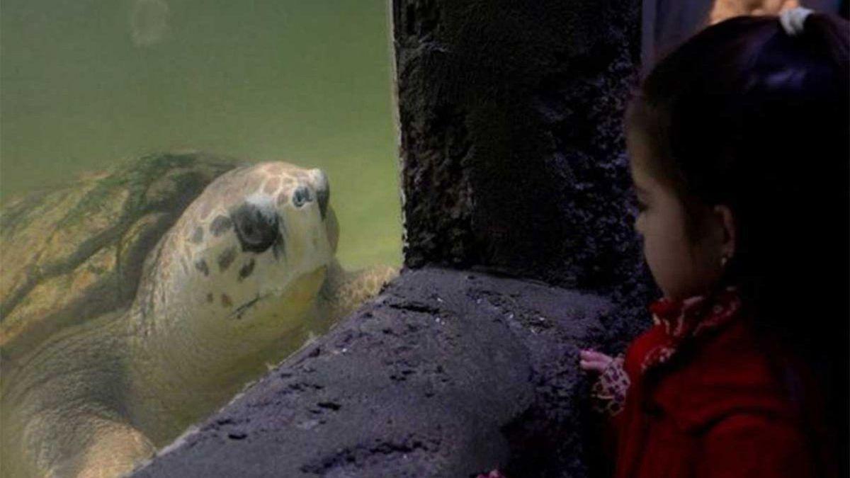 El tortugo Jorge permanecerá en su recinto, donde está bien atendido y cuidado.