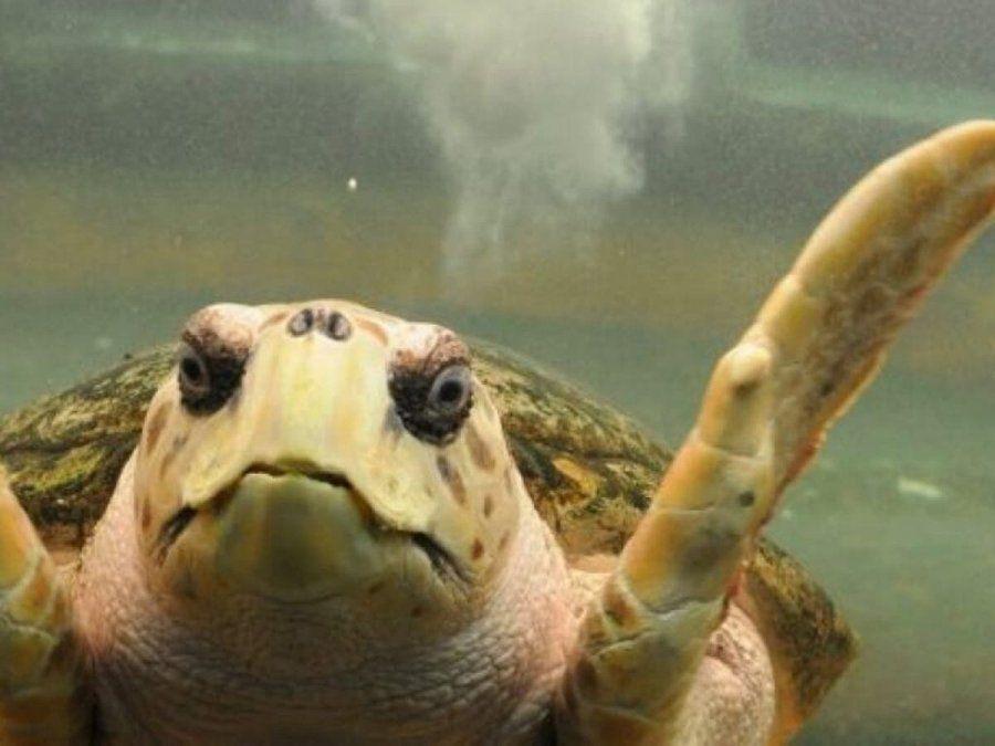 El cierre del acuario municipal, obliga a redefinir el destino del tortugo Jorge, el más famoso de los habitantes del acuario.