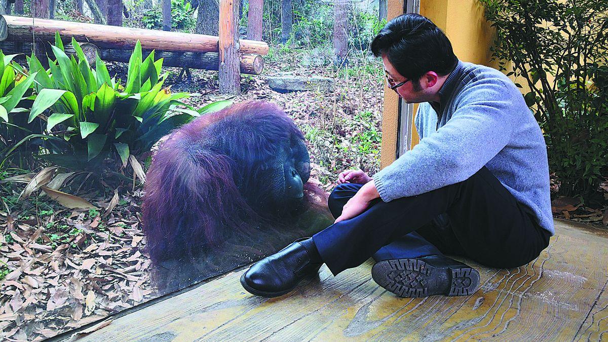 Shen Zhijun observa a un orangután en el zoológico forestal en Nanjing