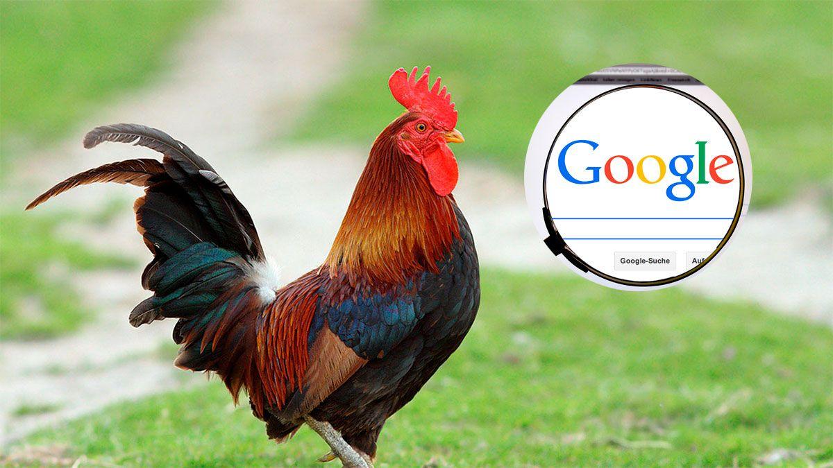 google: asi suena la palabra gallo en el traductor