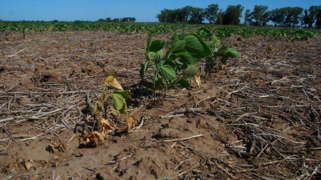 La sequía afecta a gran parte del país. Ya comenzaron a declarar la emergencia agropecuaria en algunas provinicias.