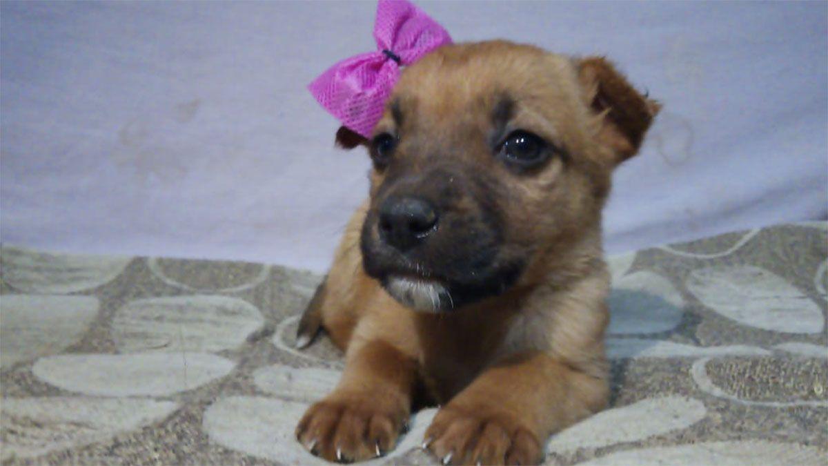 En adopción luego de ser víctima de maltrato animal en San Martín.