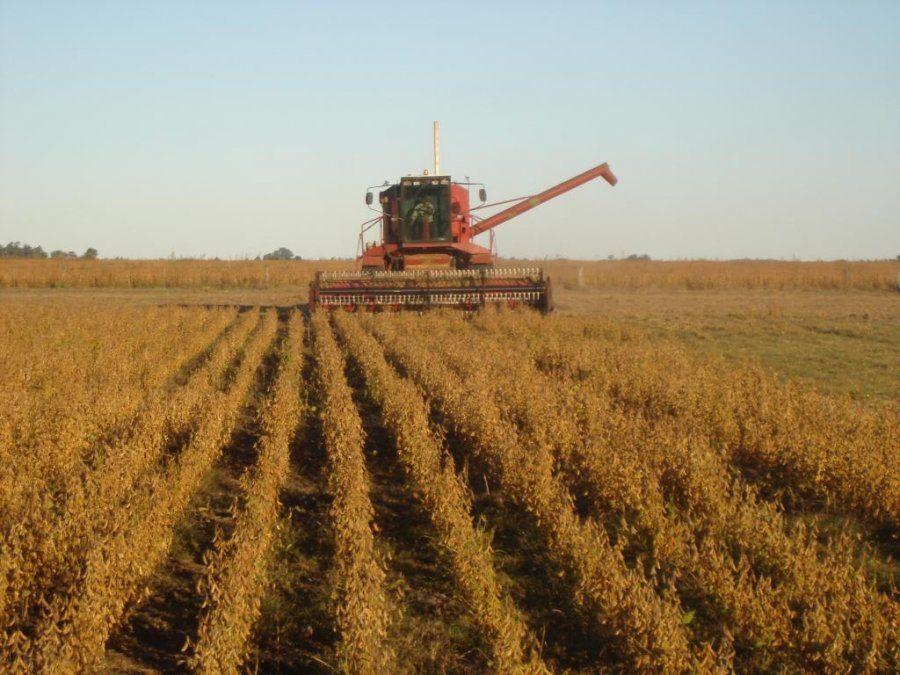 Un 70% de la soja total en el país mantiene una condición de cultivo normal