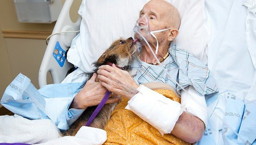Pidió ver a su perro en el hospital antes de morir y el encuentro conmociona en las redes