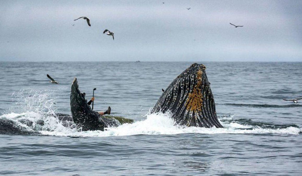 El momento en que una ballena casi devora a dos kayakistas