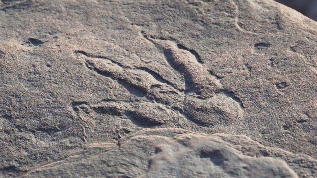 Una niña descubre una huella de dinosaurio de 220 millones de años