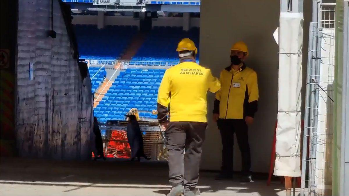 Dos pingüinos en las obras del Santiago Bernabéu