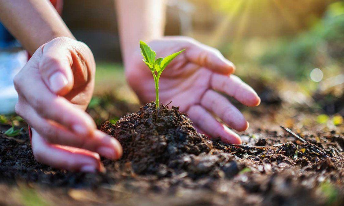 Día de la Tierra: qué se puede hacer para cuidar el planeta