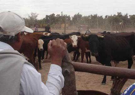 La suba de la carne duplicó la renta de ganaderos locales