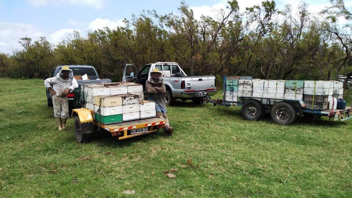 Los apicultores pierden 28 días de trabajo porque deben cumplir una cuarentena