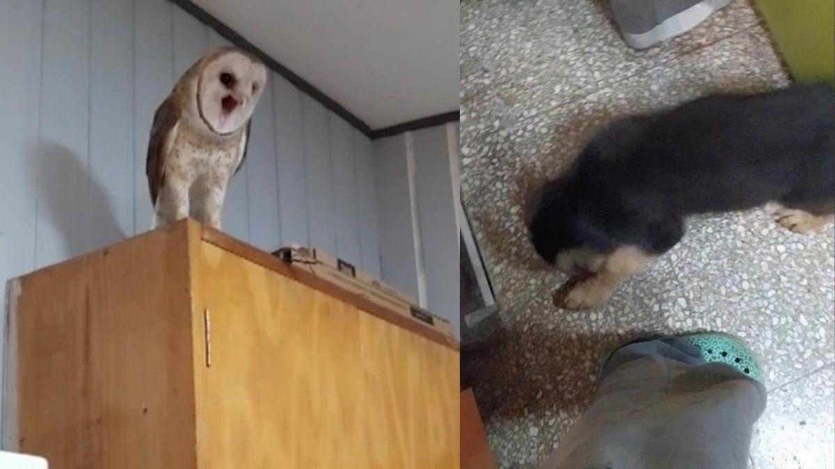 A Kiki no le gustó. El desopilante encuentro entre una lechuza y un perro.