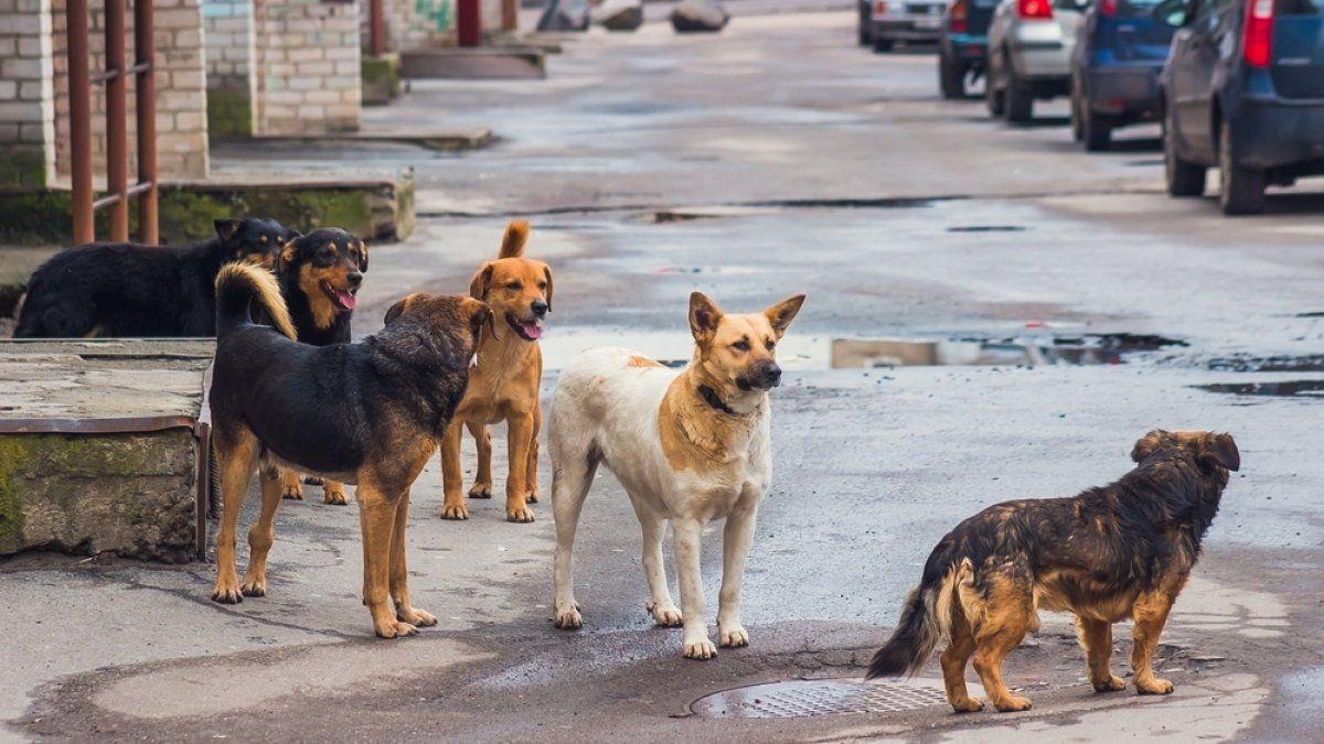En Jujuy. Piden castraciones masivas para tener una ciudad sin perros en la calle.