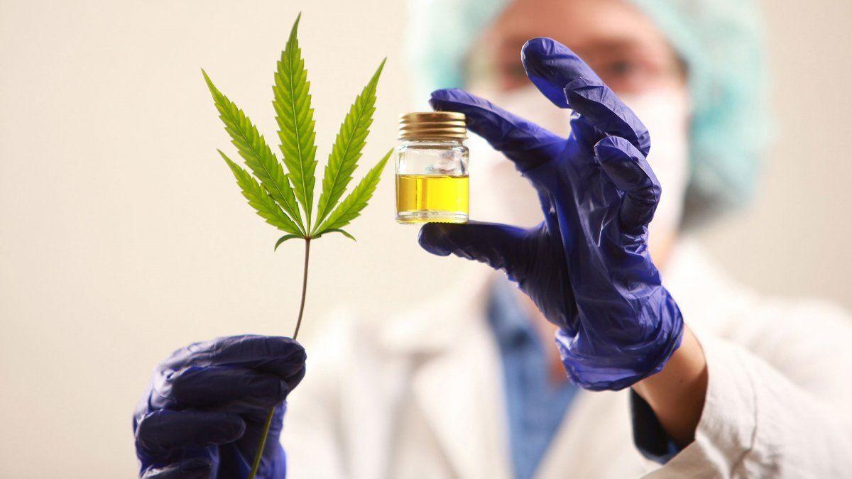 La Legislatura sancionó la Ley 9298 sobre el empleo del cannabis medicinal en Mendoza.