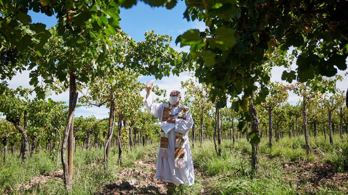 El padre Francisco Bernardi de la Pastoral Migratoria e Itinerante de la Arquidiócesis de Mendoza bendijo los frutos próximos a cosechar en El Borbollón.