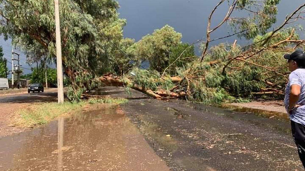 La caída de árboles derivó en la interrupción del servicio de energía eléctrica y el personal de la Cooperativa Eléctrica trabaja para recuperarlo.
