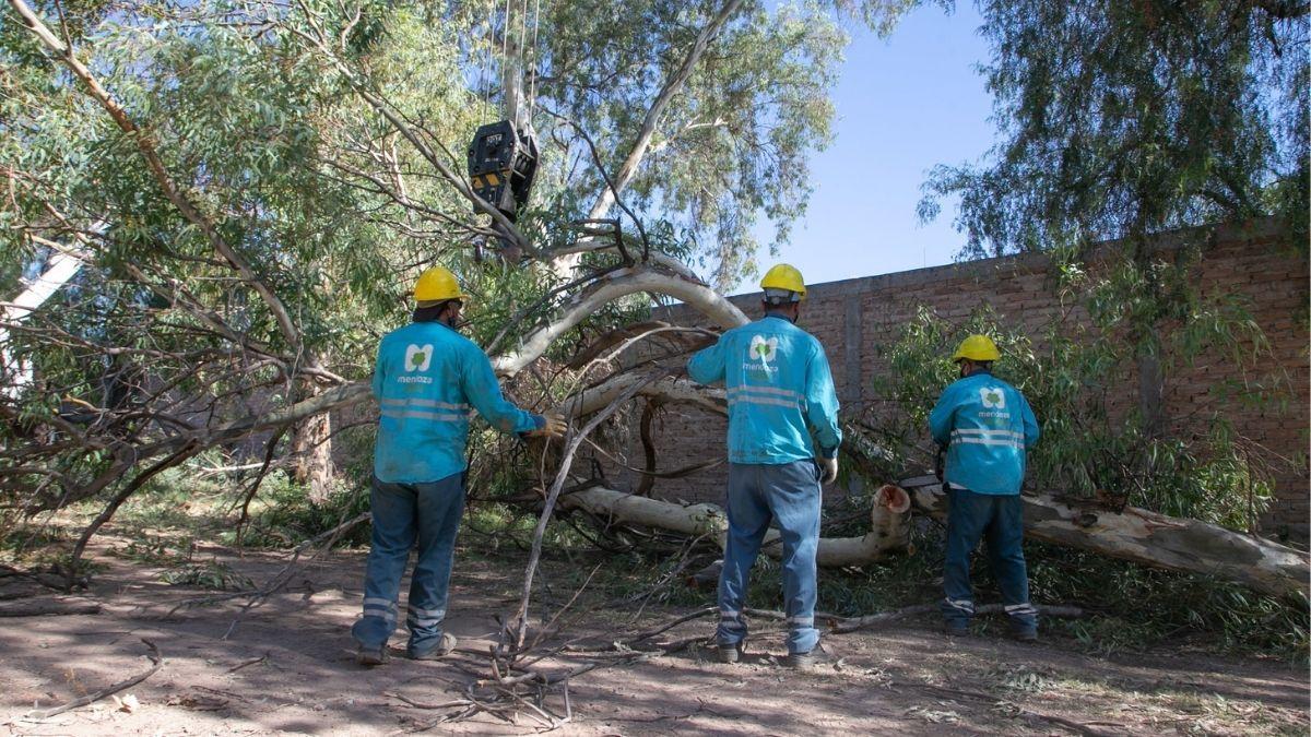 A pedido del hospital Lagomaggiore, autorizan talar 32 árboles