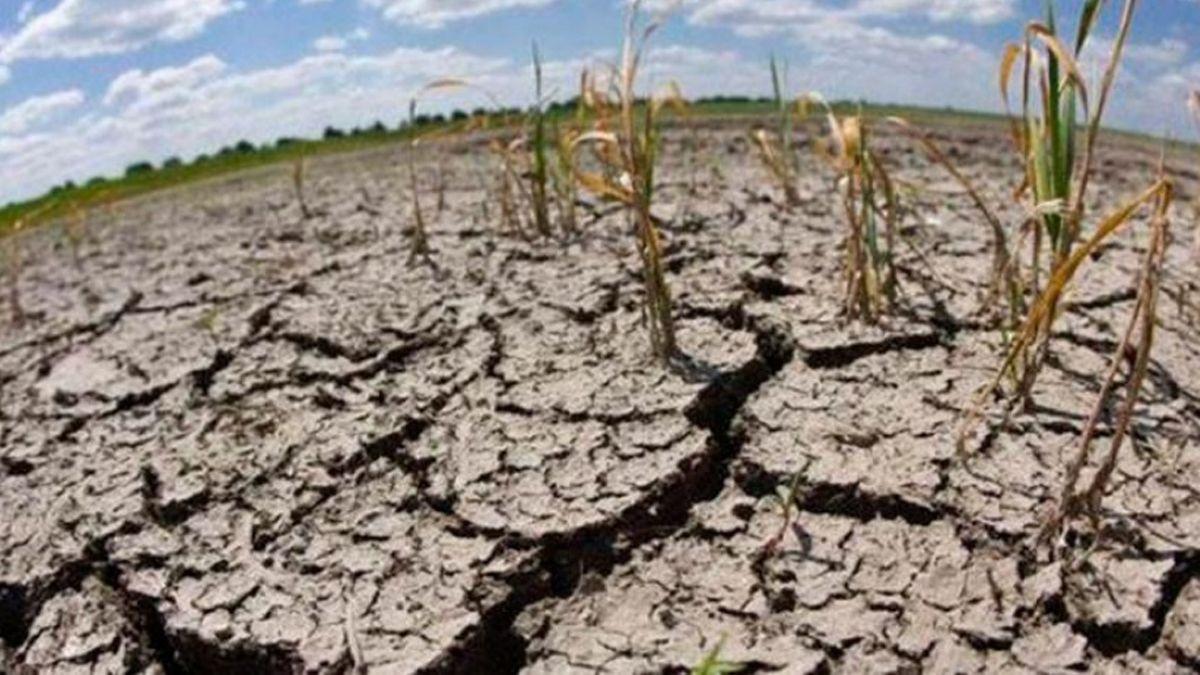 La sequía afecta a gran parte del país. Ya comenzaron a declarar la emergencia agropecuaria.