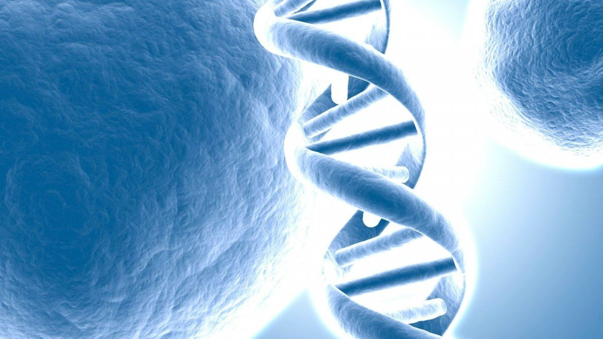 Buscan la red social de los genes para predecir enfermedades