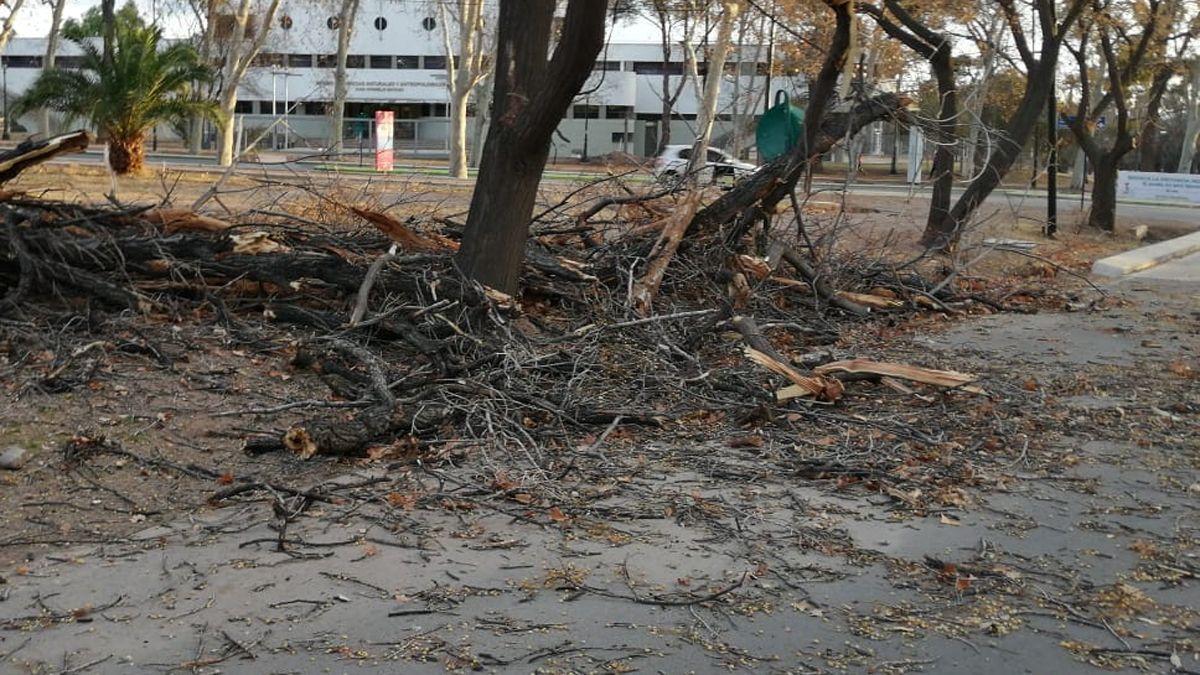 La caída de más de un centenar de árboles, además de postes y cables se produjo este fin de semana en todo Mendoza debido a la presencia del viento Zonda, según informaron desde Defensa Civil.
