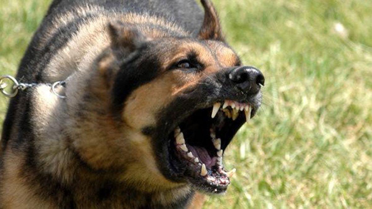 Dos perros le arrancaron los genitales a un niño. Son de raza pastor alemán.