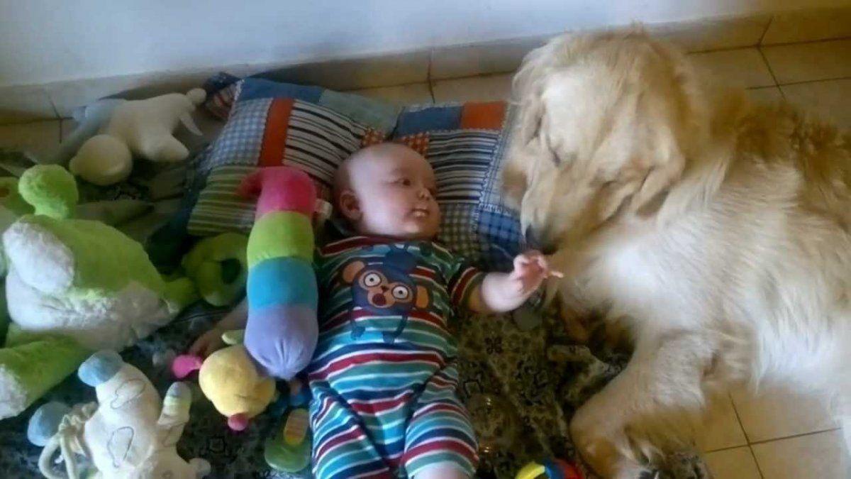 Tierno. Un video capta cómo un can ayuda al bebé a subir a la cama.