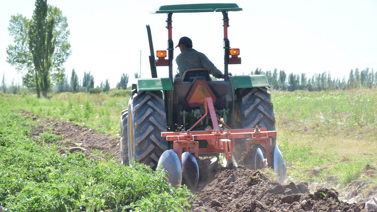 Jóvenes de Lavalle cultivan tomate y zapallo para costear sus estudios