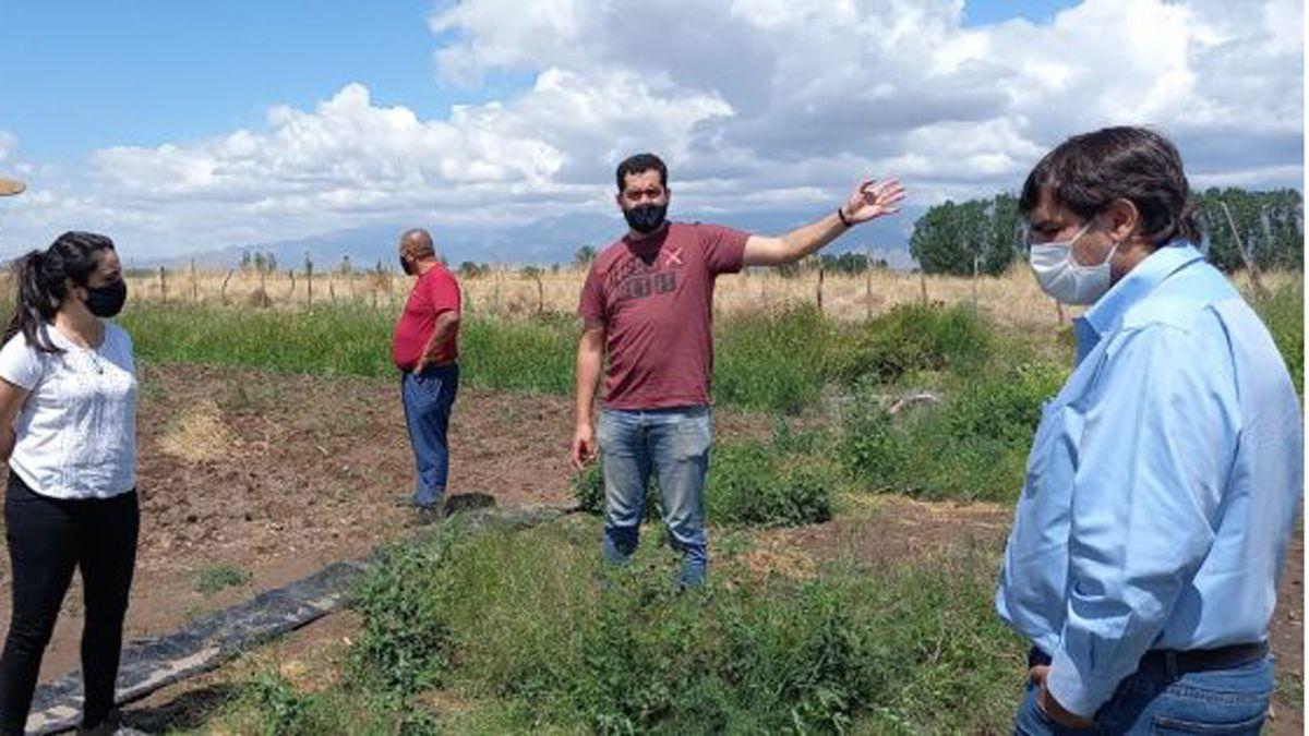 Integrantes del Ministerio de Economía recorrieron fincas y campos del Valle de Uco. El granizo no causó grandes daños.