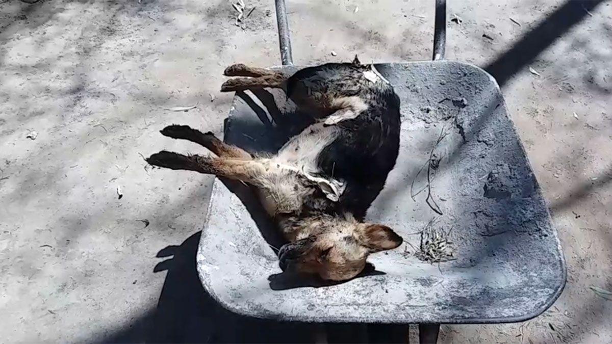 Unos 30 perros murieron envenenados en Luján