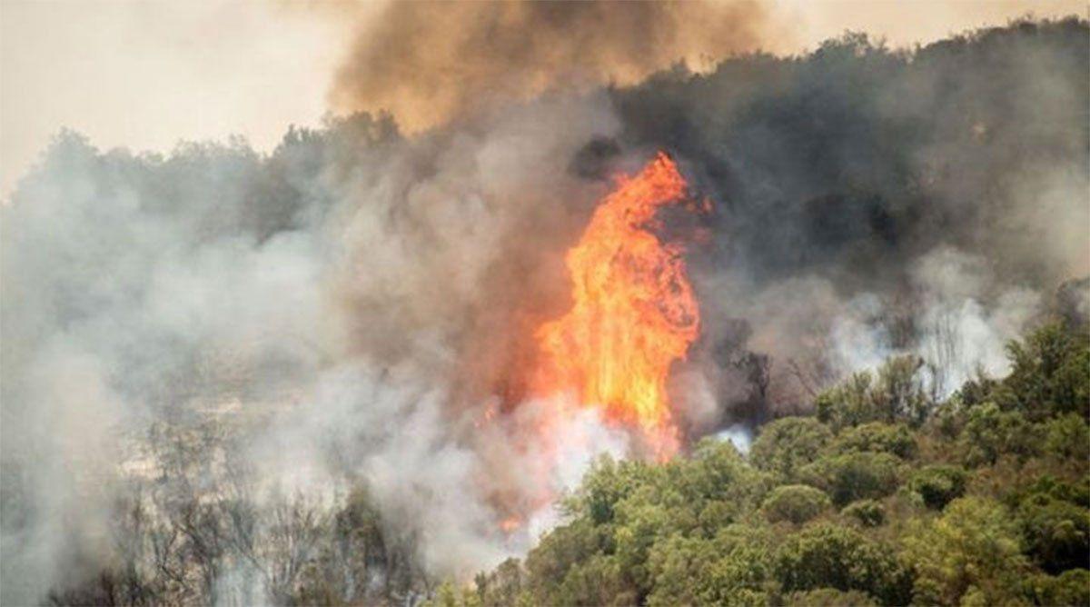 El fuego arrasó más de 22 mil hectáreas de las yungas jujeñas. Foto: Gentileza El Tribuno de Jujuy.
