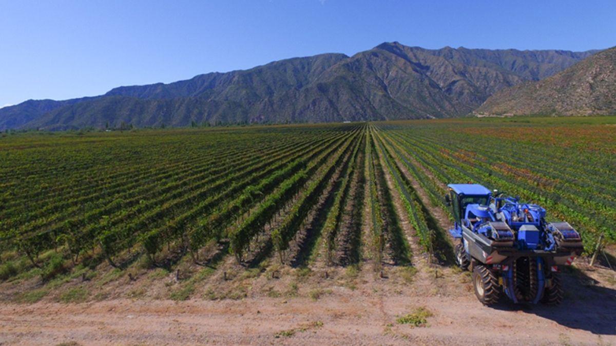 El BID financiará estudios para conocer los suelos de vitivinicultura argentina.