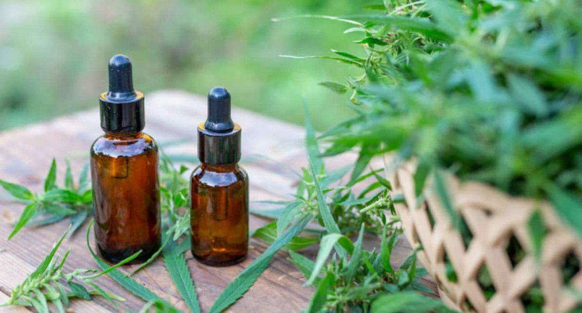 Luego de la primer cosecha que se daría a principios del otoño del 2022, la empresa que tiene el predio en Santa Rosa pretende producir resina de cannabis que es lo que se consume como aceite medicinal.
