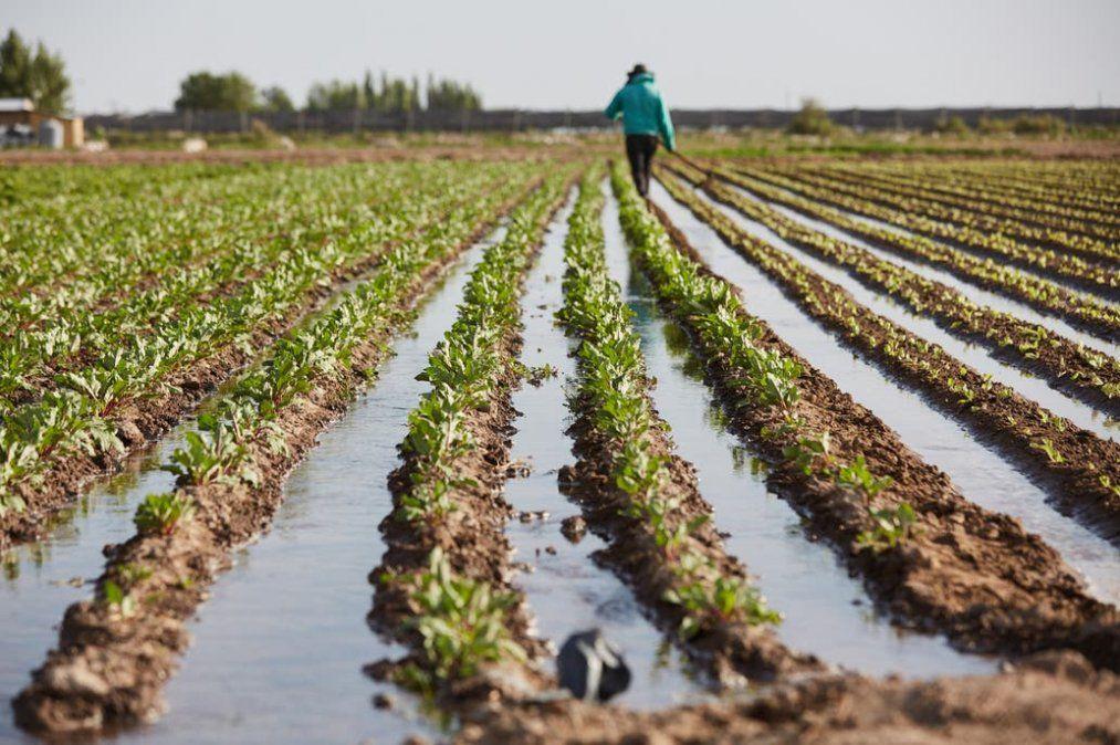 Mendoza es la provincia con mayor superficie con horticultura orgánica del país