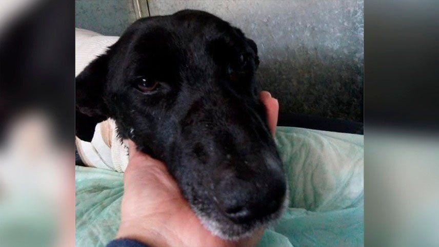 Poco a poco Paola, la perrita de Cacheuta, muestra mejorías en su salud