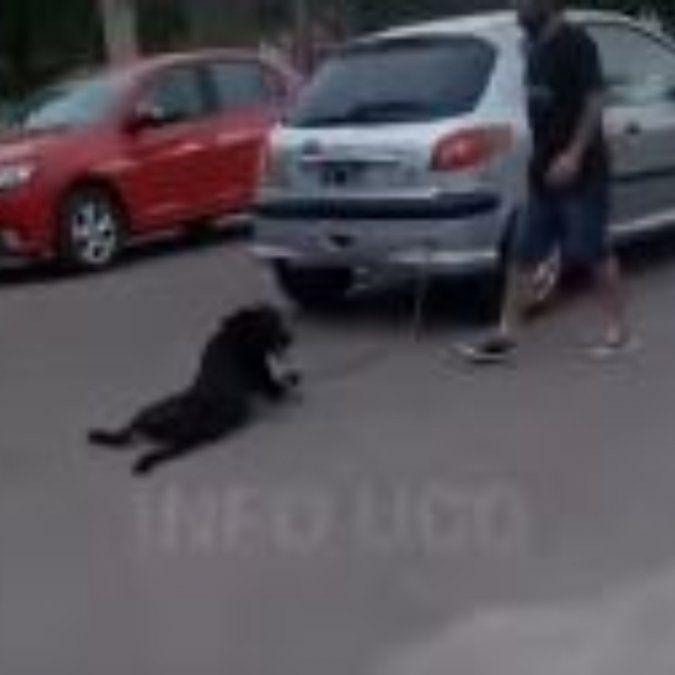 Felipe, el perro arrastrado por la docente se recuperó