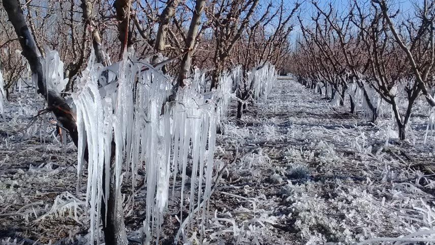 Recomiendan la emergencia agropecuaria nacional para Mendoza, Río Negro y Santiago