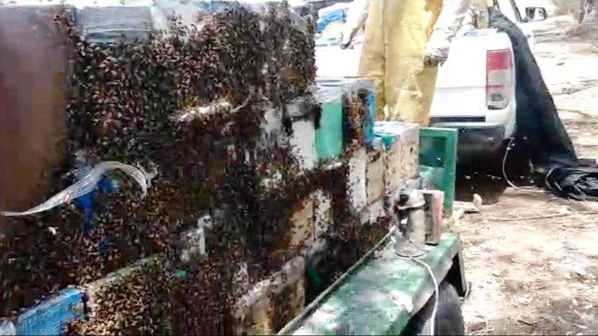 Un productor apícola de Luján viajaba a Santa Fe con 200 núcleos de abejas y los controles en San Luis lo demoraron 6 horas en la ruta y se le murió gran parte de su carga