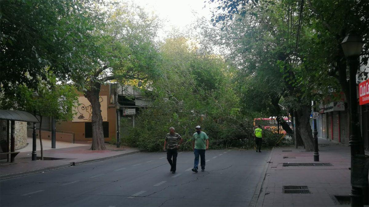 Tres gandes ramas cortaron por completo calle Patricias Mendocinas