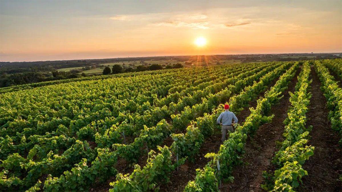 Los caminantes del viñedo