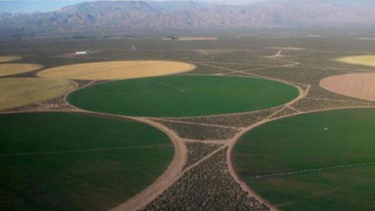 Mendoza se posiciona como una de las más grandes productoras de papa del país. La empresa Simplot posee unas 6.000 hectáreas cerca de Pareditas para extender los cultivos del tubérculo