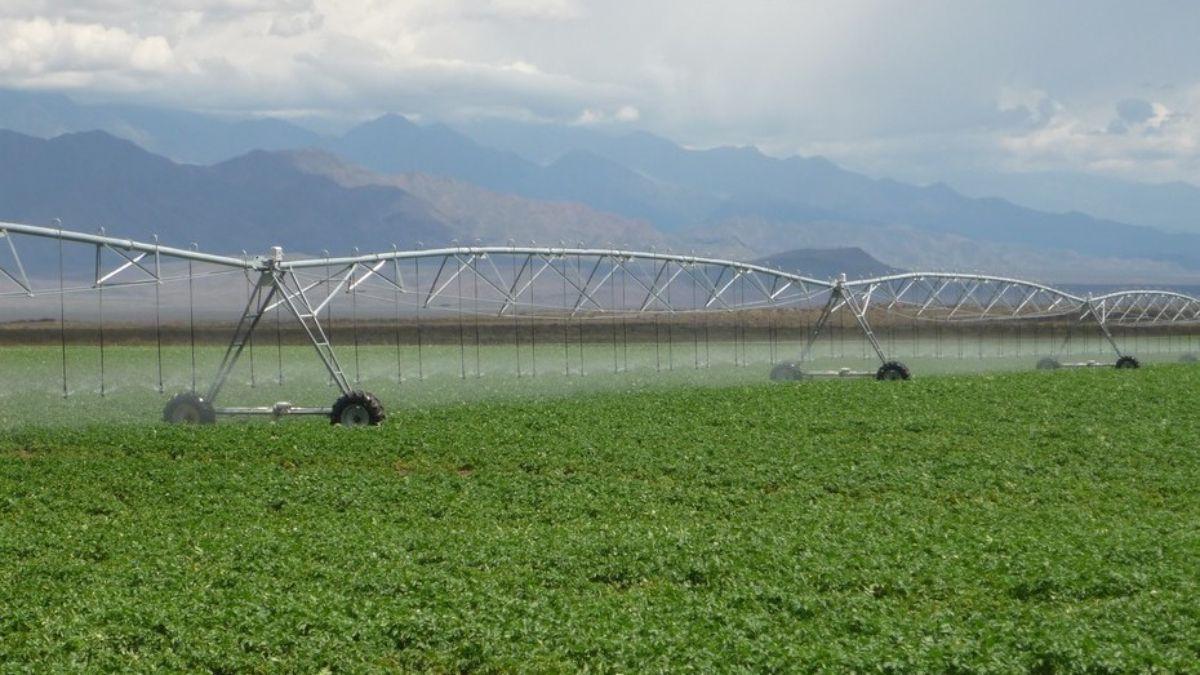 Un gran desarrollo agrícola fue la primera etapa de Simplot en Mendoza. Tienen cultivadas con papas más de 200.000 hectáreas en San Carlos para la producción de papas fritas congeladas y su exportación.