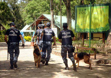 Se escapó una pantera de ocho años del zoológico de Córdoba