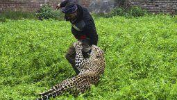 Estremecedoras imágenes de un leopardo que ataca una ciudad en India